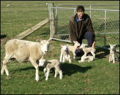 Brian Quinn of Alexandra with Supermum and her six lambs. The 5-y-o Kelso composite ewe has produced 19 lambs in five seasons. (Des Williams photo)