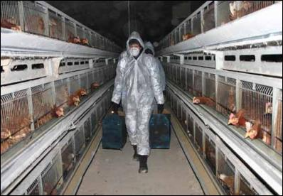 should factory farming be banned essay Factory farming is a great  with the development of factory farming animals from factory farms  is now banned in some places because it.