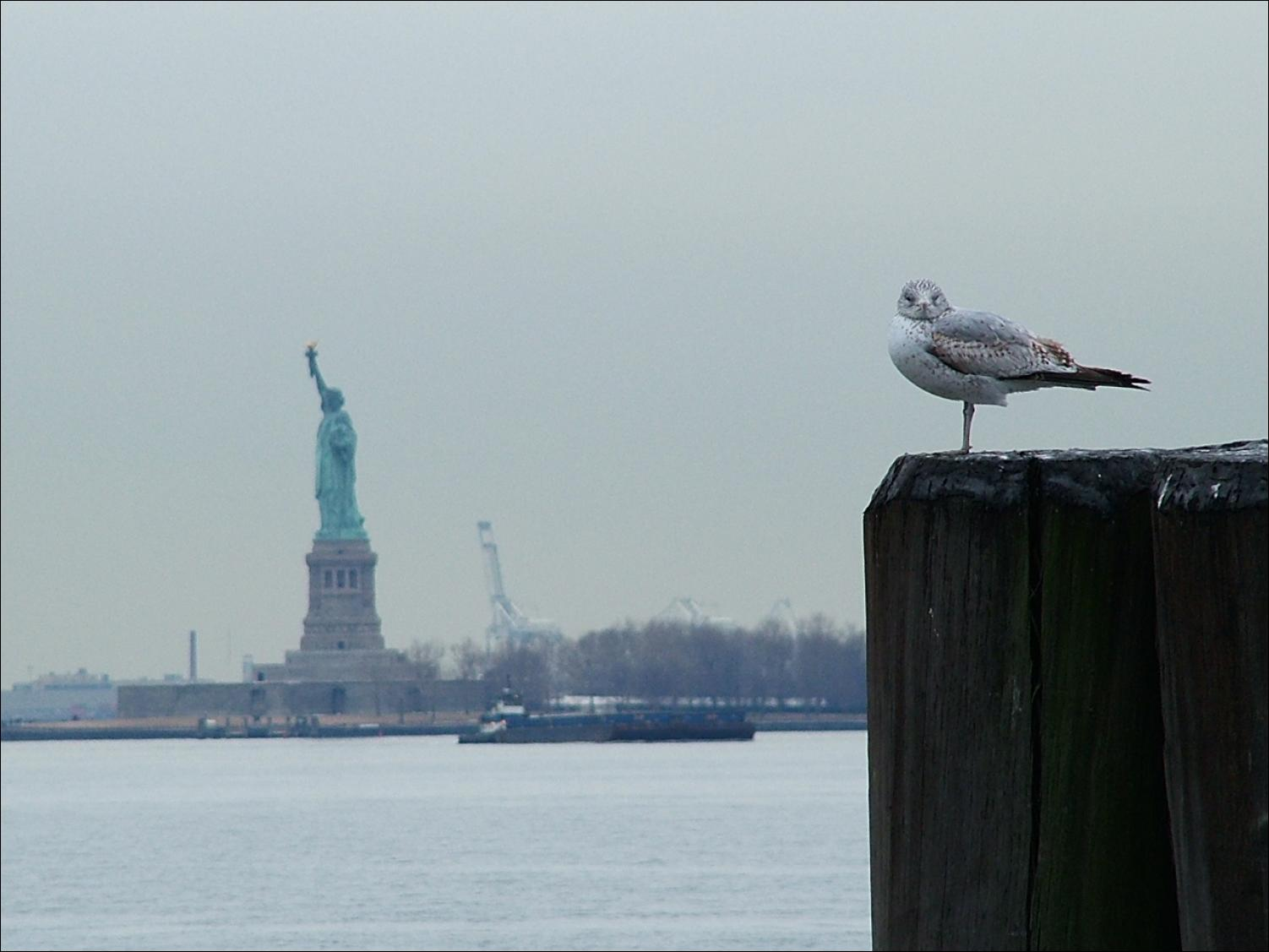 scoop photo essay manhattan sojourn scoop news scoop image statue of liberty from battery park manhattan