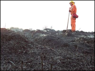 Firefighter Richard Gill checks hot spots at a fire in the Wharekauri (Greenswamp) Conservation Area on the Chatham Islands. Photo Richard Gill/DOC.