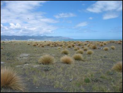 Onoke Spit grasses - Jenny Whyte