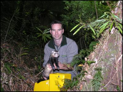 DOC Ranger Darren Page with male ferret, Photo taken by Kathy Houkamau, DOC
