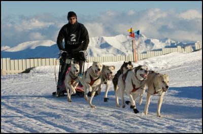 Dog Sled - Darren Watson. Copyright Garrick Cameron 2008.