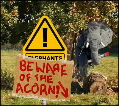 beware of the acorn