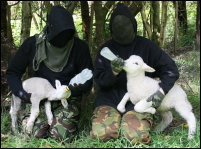 Activists Liberate Lambs