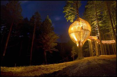 restaurant ten metres high in a redwood tree