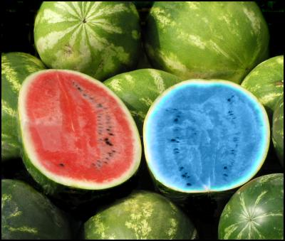 blue watermelon, green on the outside