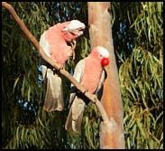 comedy gala, gala bird, red noses