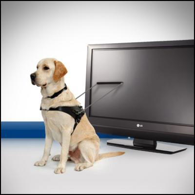 seeing-eye dog, blind, vision, television