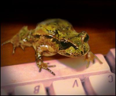 frog, keyboard, typing