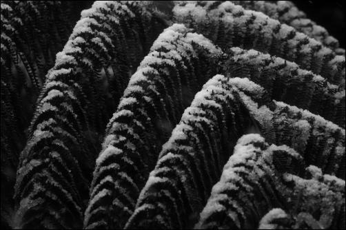 Fern frond - High resolution photos of Wellington snow, Karori. Pictures by Alexander Garside.