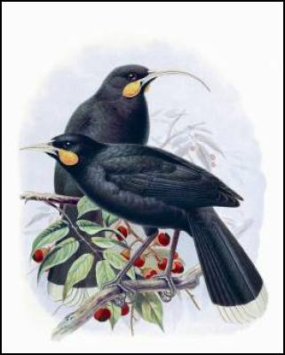 Buller's Birds of New Zealand: The Complete Work of JG Keulemans - huia