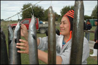 A new documentary to screen on Maori Television reveals the extraordinary life-cycle of the longfin eel (tuna), its history among Maori tribes and the hard-work of those who are helping the threatened species survive. Bleeding and drying, Meikura Arahanga hangs up tuna near Taumutu Marae, Canterbury.