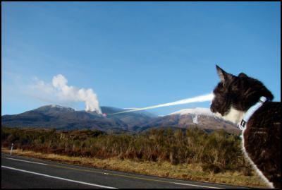 cat, laser eyes, volcano, tongariro