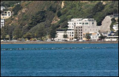 wellington harbour, dolphin pod