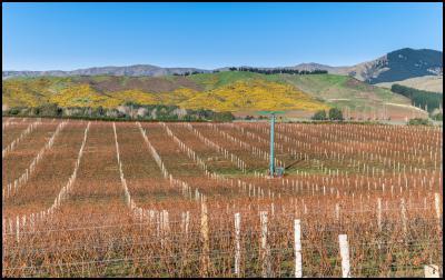 Aussie investors to sell their NZ vineyard investments