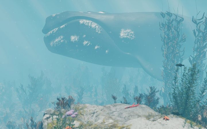 underwater, with a whale