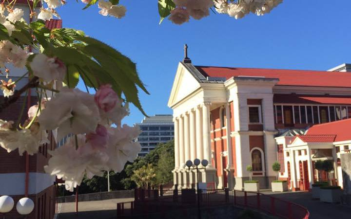 Wellington's Cathedral of the Sacred Heart with tree blossom in the foreground