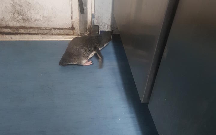 a small penguin on a lino floor, peering under a cupboard door