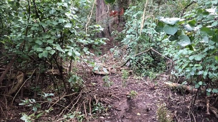 a worn dirt track through the bush